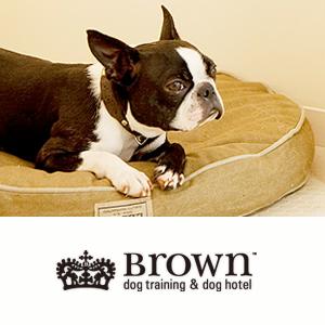 Brown(ブラウン)(犬の幼稚園 - しつけ トリミング 手作りフード グッズ ホテル ペットショップ)